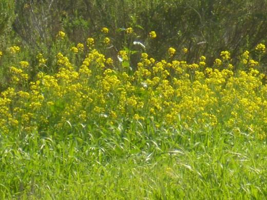 Flowers Flinging forth their Pollen