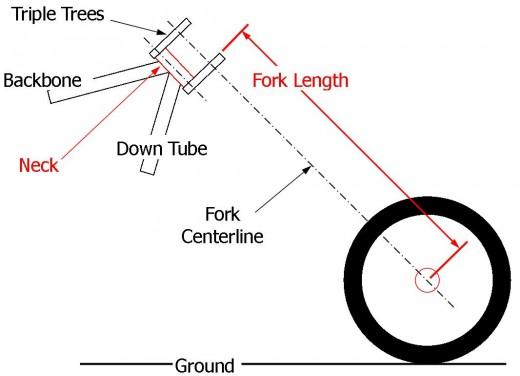 Measuring Fork Length Diagram