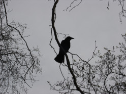 The Crow Knows: A Poem of Lost Love