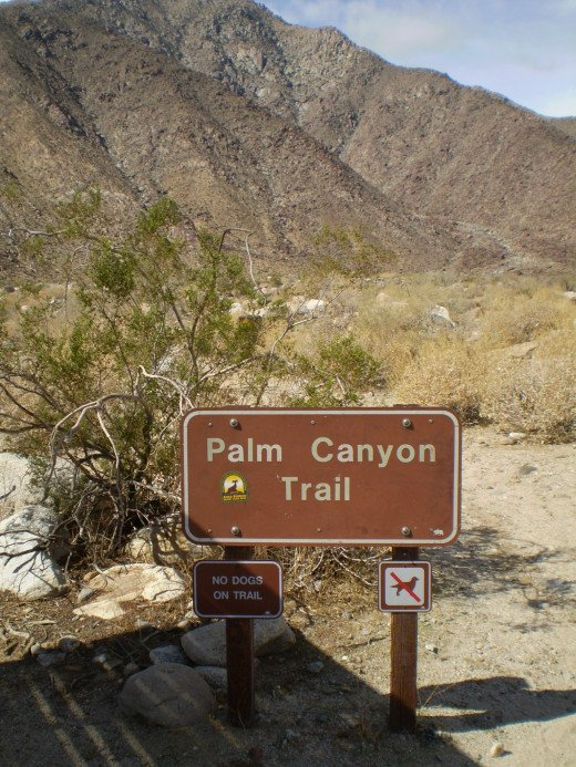 The Palm Canyon Trailhead.