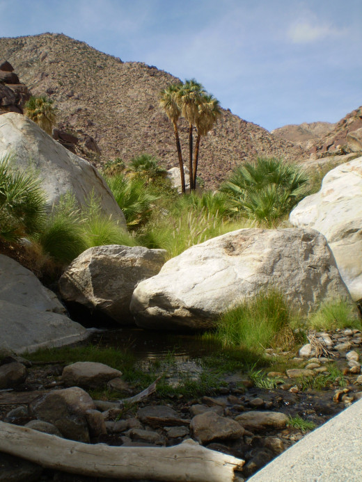 Another view of Palm Canyon.