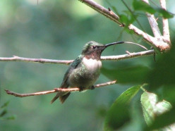 Hummingbird Hill Backyard Habitat in Pictures