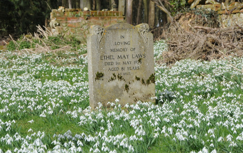 A memorial stone surrounded by snowdrops in ful bloom.