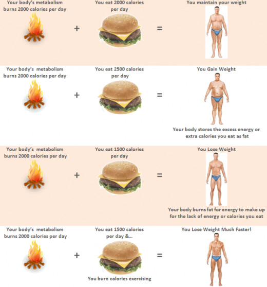 Weight loss chart - starvation mode myth