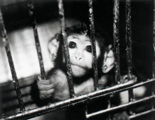 ethics of animal testing for medical The media regularly report impressive medical advances, but not the animal  research that plays a critical role in developing the new treatment.