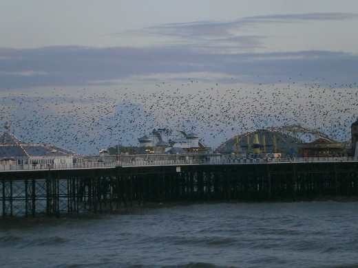 Starlings at the Palace Pier