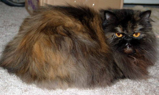 Cat hair is one of the most common allergy types.