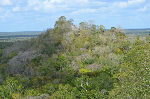Looking over at the second tallest pyramid at Calakmul
