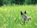 Should you Buy Dog Food with Grains or go Grain-Free? Join the debate