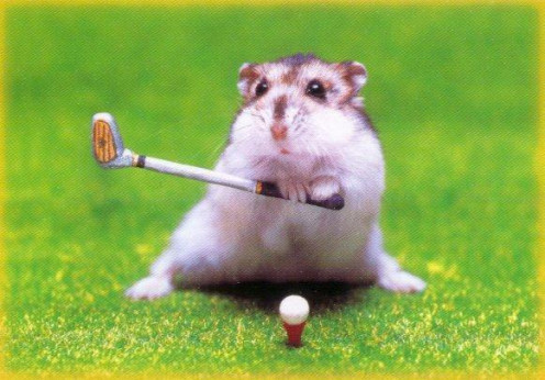 It's a hamster, playing golf - What more needs to be said?