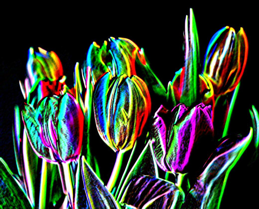 """Neon App"" transformation of a digital image of some tulips"