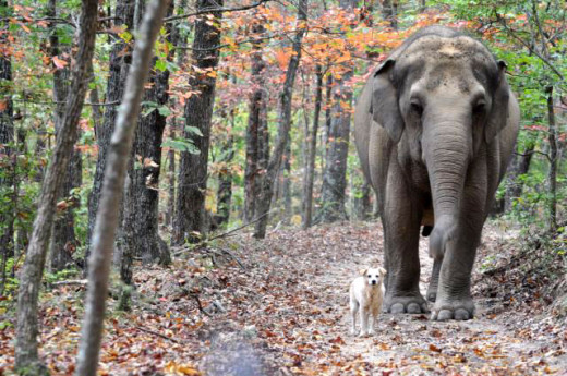 a lovling twosome, elephant and dog