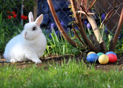 The Easter Bunny has evolved through several different versions throughout history.