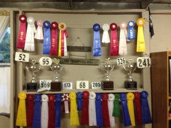 Western Show Classes