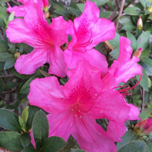 Visit a flower garden.