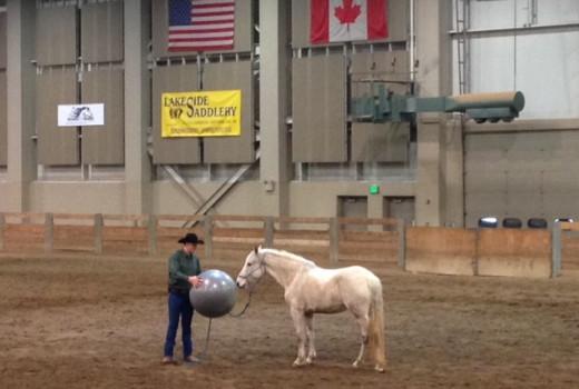 """Desensitizing a """"spooky"""" horse"""
