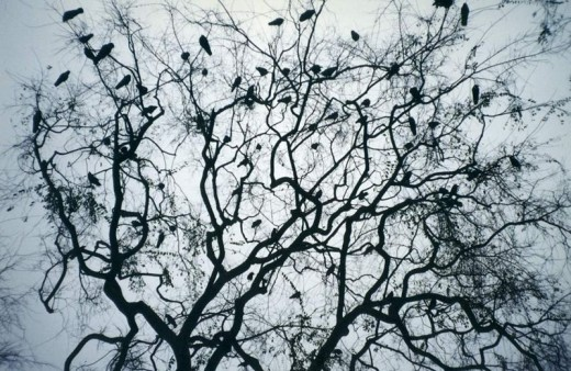A Murder of Crows (Author: Jesse Weinstein)