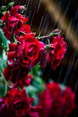Raindrops make the flowers bloom.