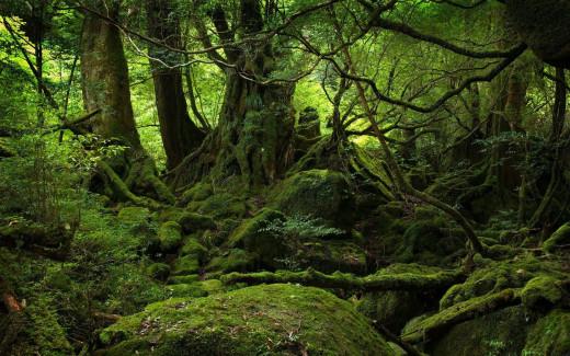 The Inner Woods of the Wyrde Woods