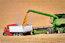 Collecting the wheat crop is a yearly-event