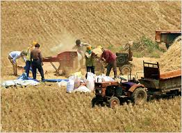 Threshing chafe from the wheat