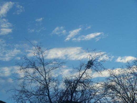 Spring's blue skies abound...