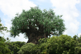 The iconic tree of life.