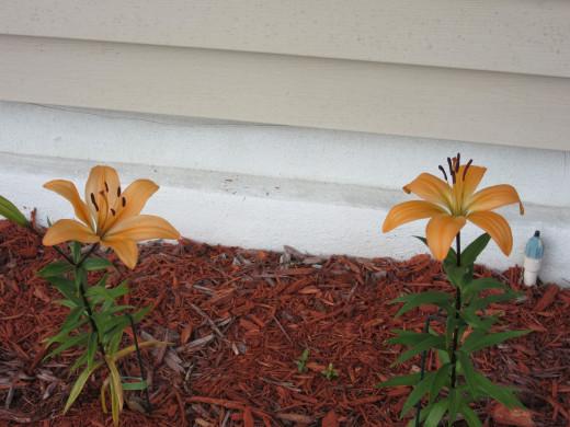 In Florida, my perennial garden starts blooming around March