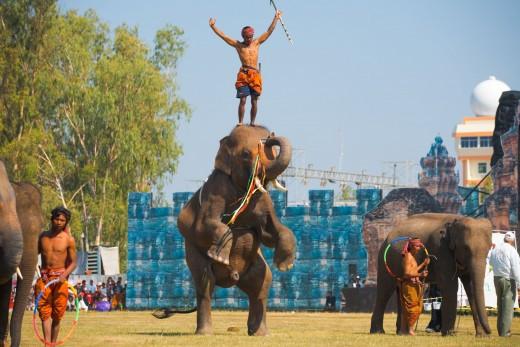 Surin Elephant Roundup Parade – Surin, Thailand