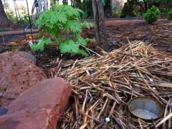Slug Management in the Garden