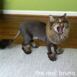 Is it bad to shave your cat?