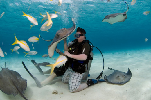Snorkelers and scuba divers interact with stingrays at Stingray City.