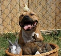 For the Love of Pitbulls-Someone has to take a stand on their side
