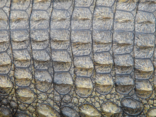 Crocodile skin.