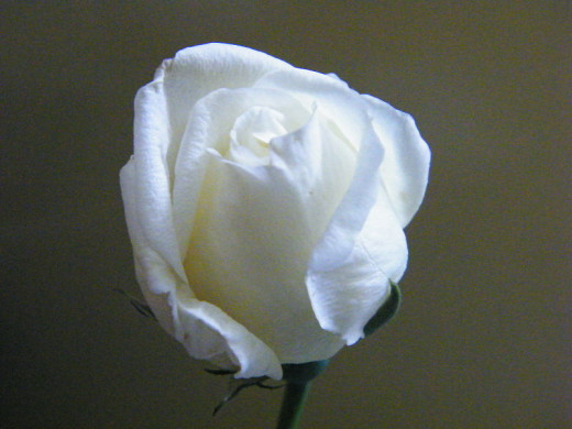 The white rose bud symbolizes purity and innocence (according to Proflowers).