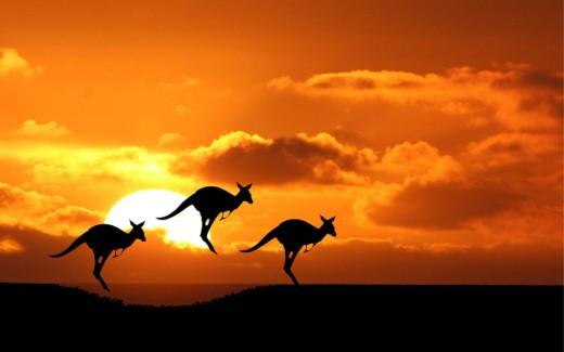 The Kangaroo Hop, Australia