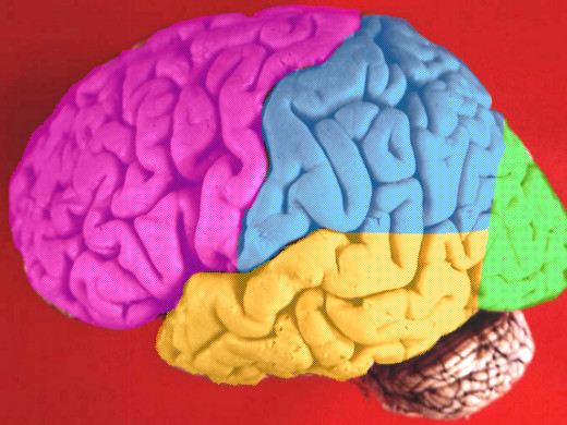 A diagram of the human brain with the frontal lobe colored in pink.