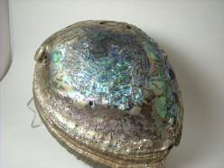 Rock Tumbling ~ Abalone Shell