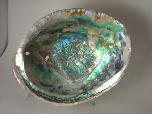 Shell Inside