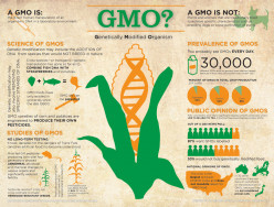 GMO's: What are they and how do they affect us?