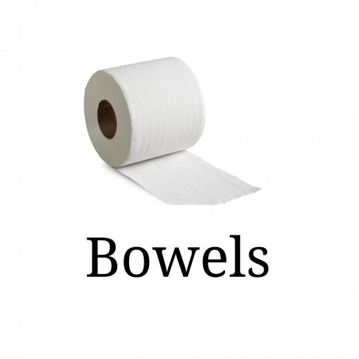 Bowels