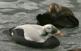 Taken at Seward,Alaska.