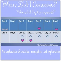 When Did I Get Pregnant? When Did I Conceive?