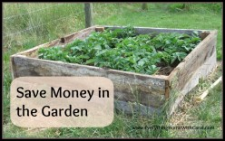 A Frugal Way to Grow a Garden