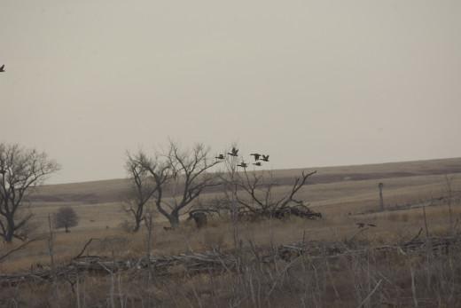 Sighting of Ducks from Reservoir of Kirwin Reservoir