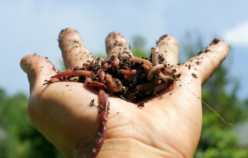 Solve your waste problems through Vermicomposting