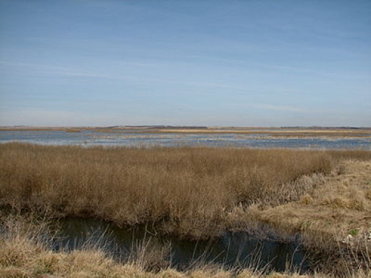 Cheyenne Bottoms Marshes