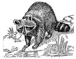 Lovely artwork of a raccoon.