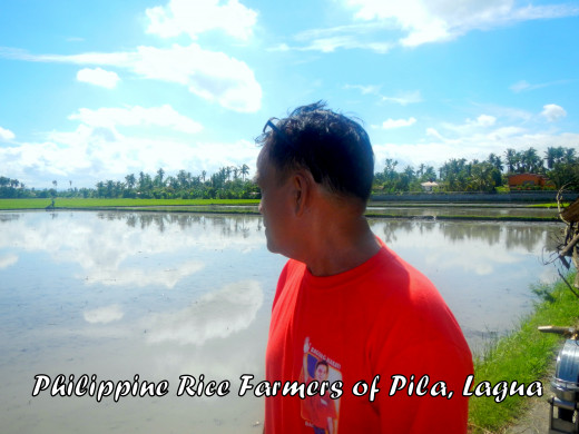 A Filipino farmer from Pila, Laguna looks at the farm that is ready for tilling. Planting of rice starts in one week.