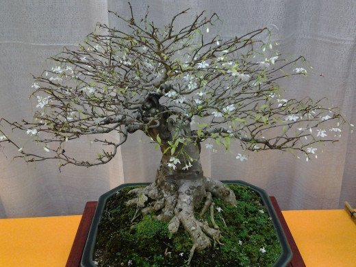 A bonsai work of art.